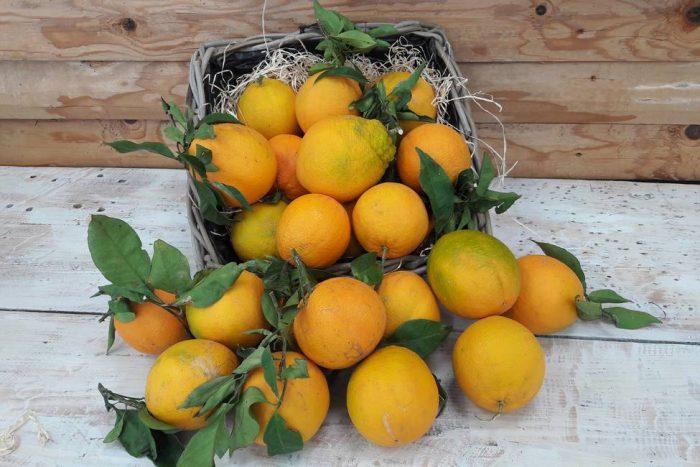 Oranges BIO les serres à pépé