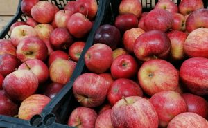 Pommes BIO Bourg-en-Bresse